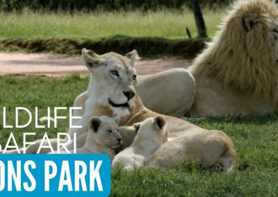 lion-park-wildlife-joburg
